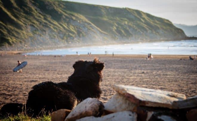 Koira espanjalaisella rannalla