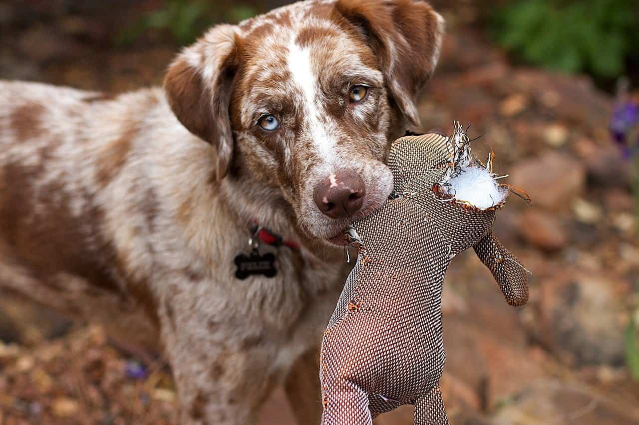Koira Vinkuu