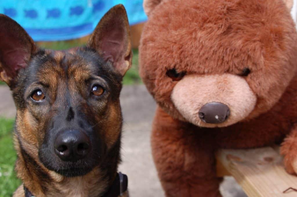 Koira ison nallekarhun kanssa