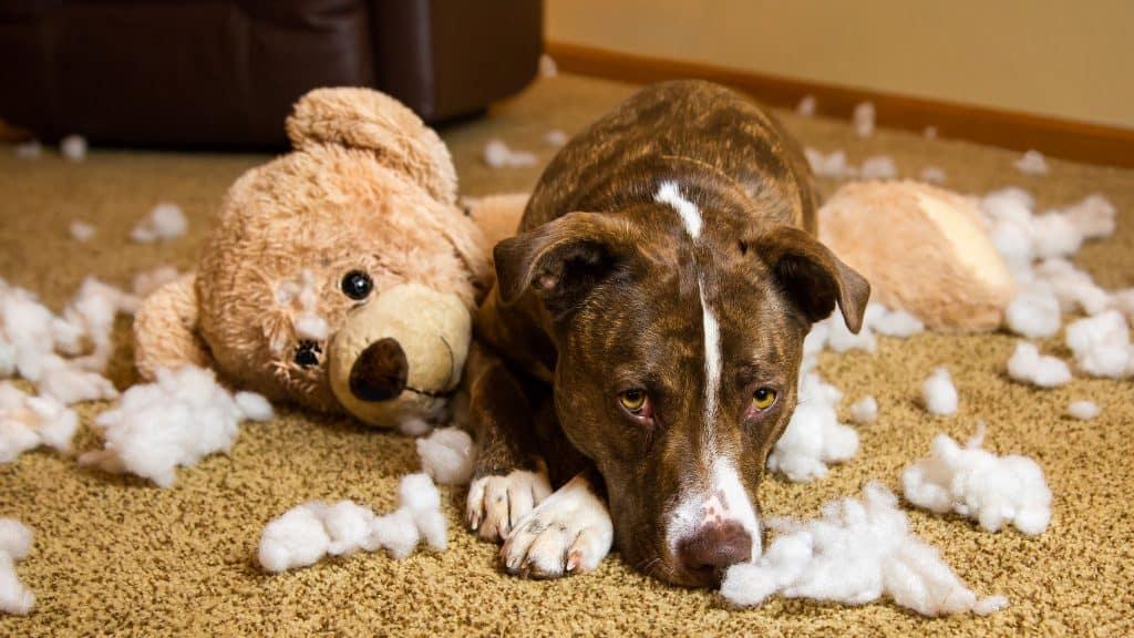 Koira ja silvottu pehmolelu