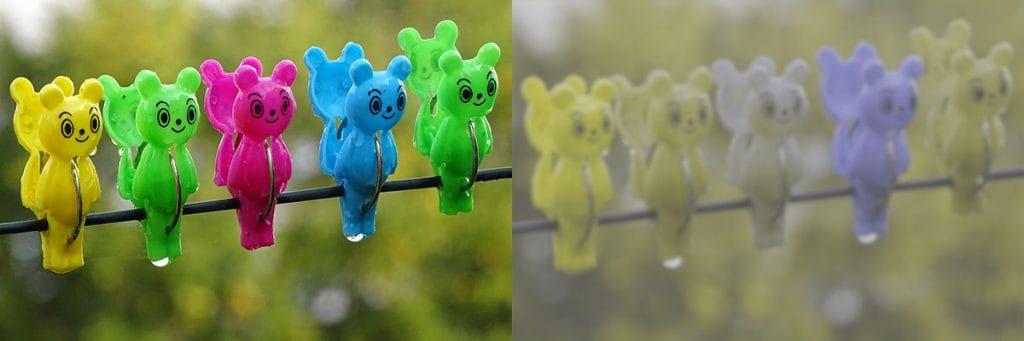 Esimerkki ihmisen ja koiran näkemistä väreistä