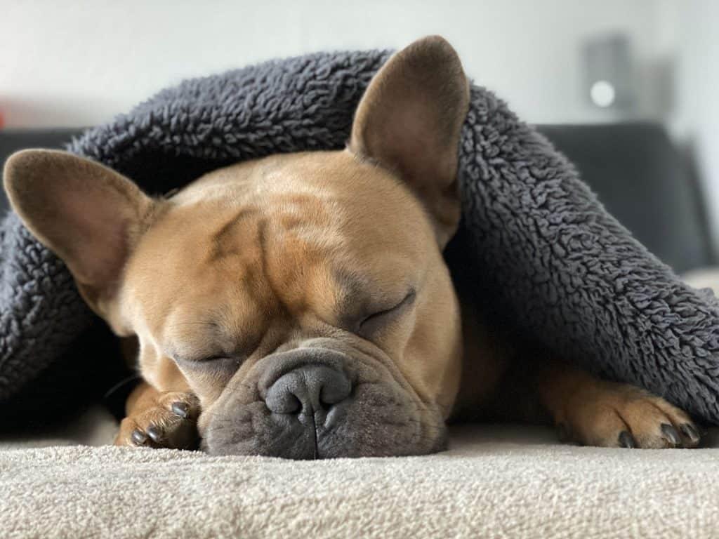 Rentoutunut koira peiton alla