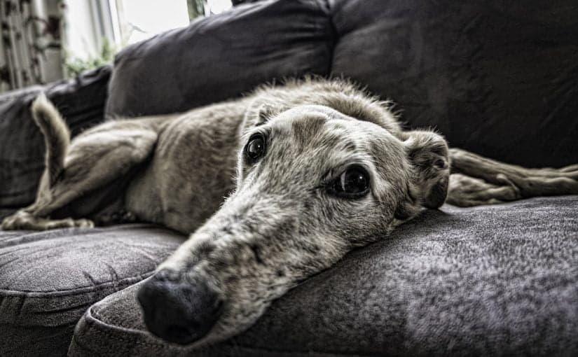 Koiralle tekemistä sisällä?